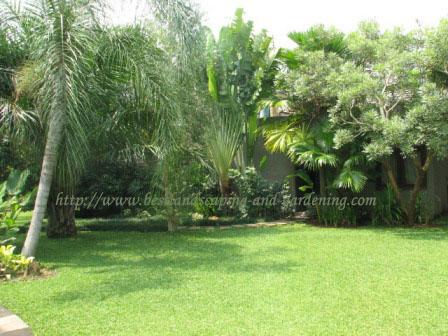gambar taman contoh taman rumahku